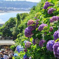 紫陽花を鑑賞する旅(長谷寺、成就院)帰りは江の島もね!