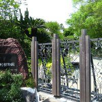 春の高知に帰ってきました^-^          ≪牧野植物園≫    ノンちゃんに案内してもらいました^?^