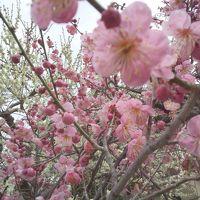 大人も春休み 京都3泊4日 3日目(自転車のってます)