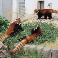 ZOOめぐり2014 第7回(鯖江市西山動物園)
