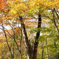 星野リゾート裏磐梯のペットルーム泊 「愛犬ハルと一緒に紅葉狩りを楽しんだ!」