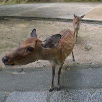 奈良  二月堂庇の反りに秋日差し
