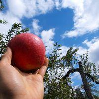 リンゴ狩りを楽しんだあとは、沼田公園の沼田城址と旧住宅巡り/群馬・沼田