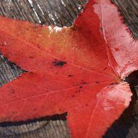 紅葉し始めた秋の三瀬をドライブ