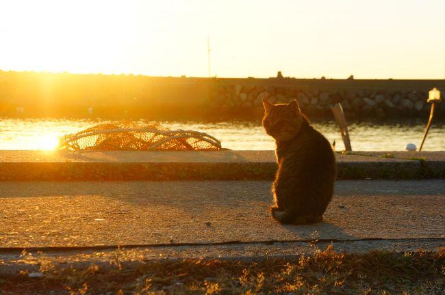 2014年10月,秋晴れの休日。瀬戸内の魅力を探しにふらりと旅をしてきました!<br /><br />【2日目】祝島(いわいしま)で夜明けの風景を楽しんだ後,民宿のご夫婦おすすめの風景を探しに島を歩きます。錦帯橋に向かってこの旅を締めくくりました。