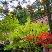 11月初めての秋晴れの朝を迎えた南禅寺