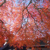 紅葉の河口湖散策〜もみじ回廊・一竹美術館・木の花美術館・オルゴールの森