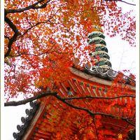 Solitary Journey [1476] 赤・黄・オレンジ・緑の織り成す美しいグラデーション♪色鮮やかな紅葉<紅葉の名所'三滝寺'>広島県広島市