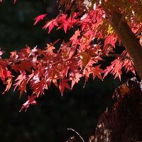 11月中旬の成田近辺
