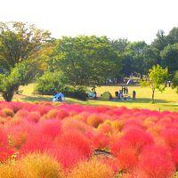 コキアからコスモスまで、秋の花々を楽しんだアクティブな週末 in 埼玉♪