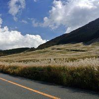 仙石高原すすき野を歩く