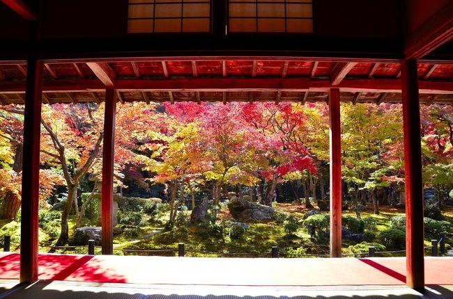 圓光寺は、瑞巌山と号する臨済宗南禅寺派に属する古刹で、徳川家康が1601年に伏見に開いた学問所が起源です。足利学校から招いた三要元佶(さんようげんきつ)和尚が開基し、1667年にこの地へ移されました。<br />江戸時代には「寺子屋」が教育施設を兼ね、この寺も別名「洛陽学校」と呼ばれました。家康が幕府を開いたのが1603年なので、それに先駆けて学校から創設したところは先見の明と言えます。そんなところにも徳川家の治世が長く続いた秘訣が垣間見られます。<br />元桔禅師は、中国最古の詩集「詩経」を家康に講義したと伝えられ、圓光寺を創建すると「孔子家語」や「貞観政要」など、多くの書籍を木活字本として刊行しました。これらの書物は、伏見版または圓光寺版と称され、木活字はこの寺に保管され、日本に現存する最古のものだそうです。また、この圓光寺学校は、僧俗を問わず入学が許されていました。身分制度が厳しかった江戸時代ながら、学問や宗教といった教育に対しては比較的門戸が開かれていたことに驚きです。こうした姿勢に共感したのか、この寺には重要文化財 円山応挙 筆「雨竹風竹屏風」(1776年)や京都出身で琳派の渡辺始興 筆「寿老人図」(1742年)といった名画が奉納されています。また、本尊の「千手観音像」も運慶作と伝えられています。