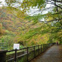 雨と紅葉の「抱返り渓谷」散策記