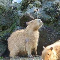 カピバラ温泉を見に行こう! 〜秋景色の埼玉県こども動物自然公園で見る愉快な動物たち〜