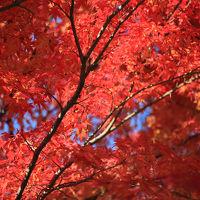箕面の滝-紅葉-2014