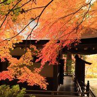 これぞ紅葉、南河内の秋色に染まるお寺さん