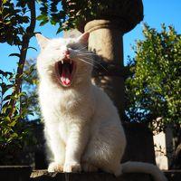 谷中猫あるき♪ 【 谷中七福神めぐり 】
