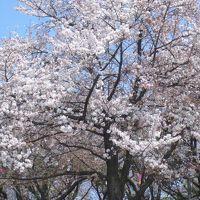 れい散歩 <都電荒川線でゆく> 荒川〜王子でちょいと桜〜懐かしの早稲田