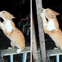 ★サラワク州のんびり旅 (2) ?クチン(猫)の街は本当に猫の街なのか?
