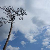 被災地の今を見に行く 2014 気仙沼~釜石編