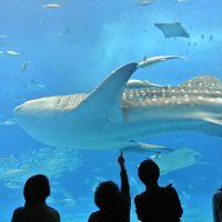 沖縄旅行 水族館と今帰仁城に行きました