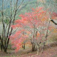 日本一の冬桜