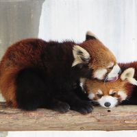 ZOOめぐり2014 第11回(とくしま動物園)