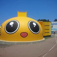 個人的に日本一  【福井 越前松島水族館】 こんぺいとうのぬいぐるみを購入