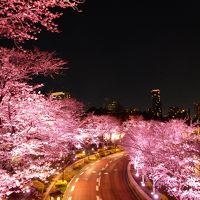 東京の桜の名所を弾丸トラベル