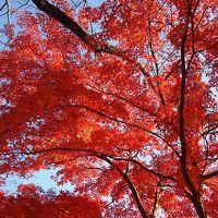 紅葉の秩父札所めぐり 一番〜三番