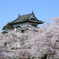 バッチリ♪ これぞ満開! 弘前公園の桜 2日目
