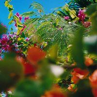 あたたかな夜、マンゴーの匂い。 〜Saipan〜