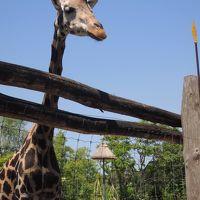 キリンと一緒に写真撮影♪ブダペストの動物園を散策