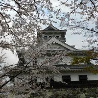 長浜豊公園(長浜城)の桜は満開でした〜!◆遅めの桜を求めて滋賀県北部へ≪その3≫