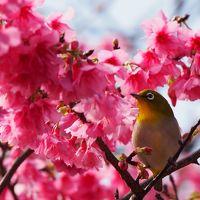 早春の沖縄(3泊4日)3日目 ひと足早い春を感じて