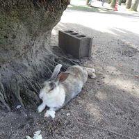 ウサギに癒されに広島へ2