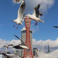 USJ&神戸旅行(後編) 知らなかった神戸がこんなに魅力的な街だとは。