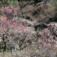 小石川後楽園で観梅&神楽坂散策