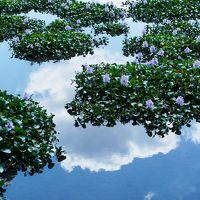 曼珠沙華~明日香や、葛城、いつものように盛りだくさんの花めぐり 2015年