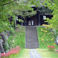 横浜・西方寺のヒガンバナは3色