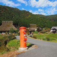 京都府・亀岡市のコスモス(夢コスモス園)と美山ドライブ