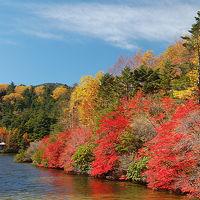北八ヶ岳白駒池 紅葉見ごろで大賑わい