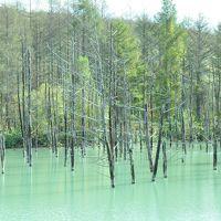 青い池は今、緑色で幻想的だった【道東プチ旅行NO1】
