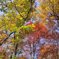 那須高原の素晴らしい紅葉を観る事ができました。