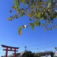 いつもの散歩道~浅間大社に秋が来た、人気番組放送後に
