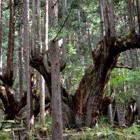 蕪山(1069m) 株杉と展望の山