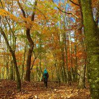 今シーズン最後の秋山/雲取山から飛竜山へ