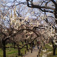 梅の偕楽園巡り