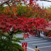 ツアーで行く 紅葉と古い街並み−3 紅葉の豪渓 最上稲荷 桜と紅葉の普門寺