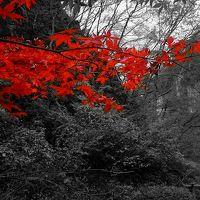 晩秋の東北 2015